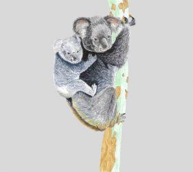 koala-cadeauenfants